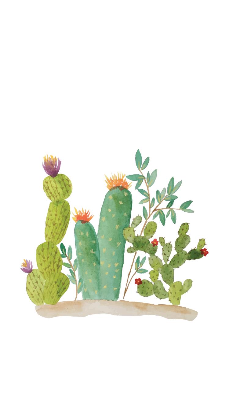 Cactus Wallpaper - 6