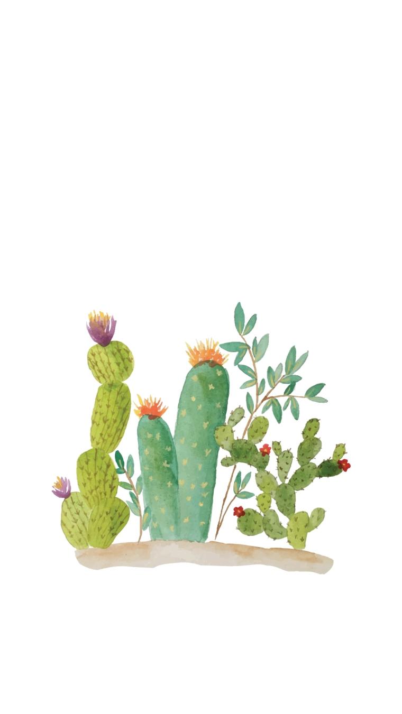 Cactus Wallpaper - 6Plus