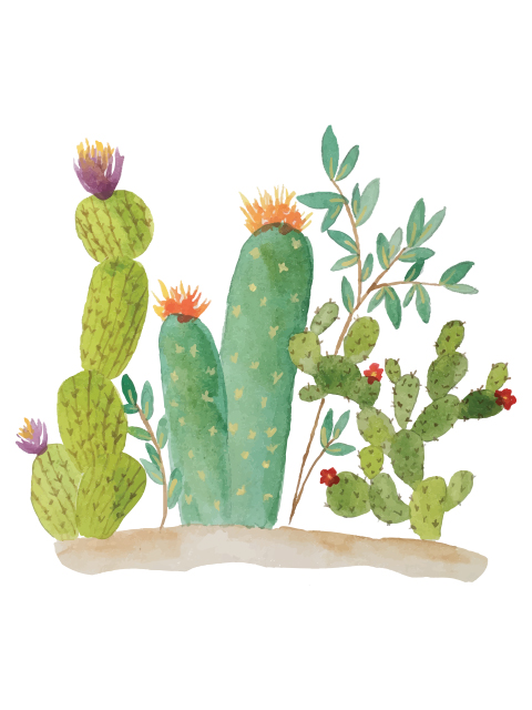 Cactus Wallpaper - Android